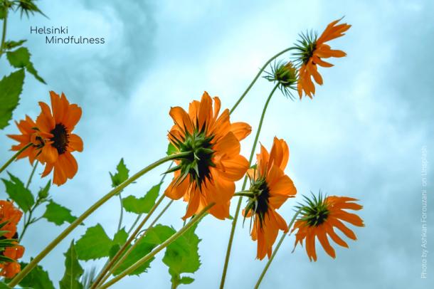 Erja-Lahdenpera-Helsinki-Mindfulness-Rajat-ja-kukoistaminen