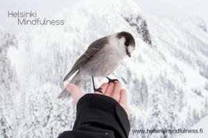 Helsinki Mindfulness, irtipäästäminen